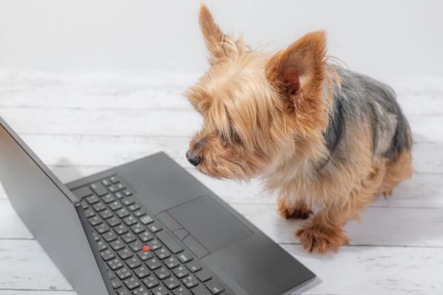 犬とパソコン2